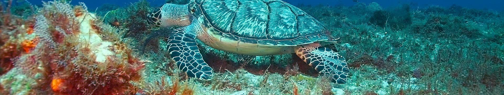 Plongée & Snorkeling au Mexique