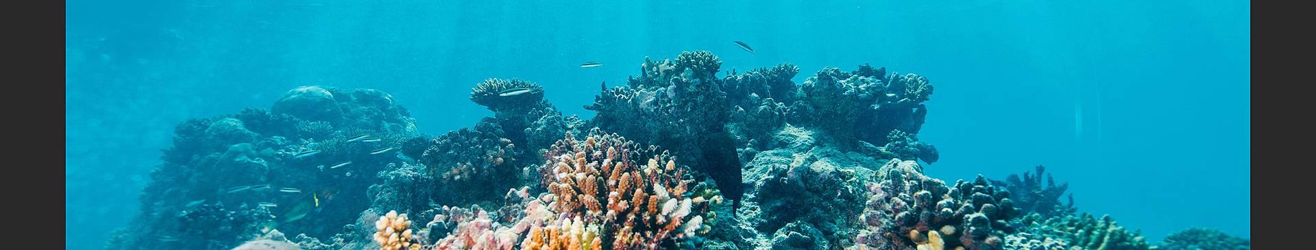 Plongée & Snorkeling au Mozambique