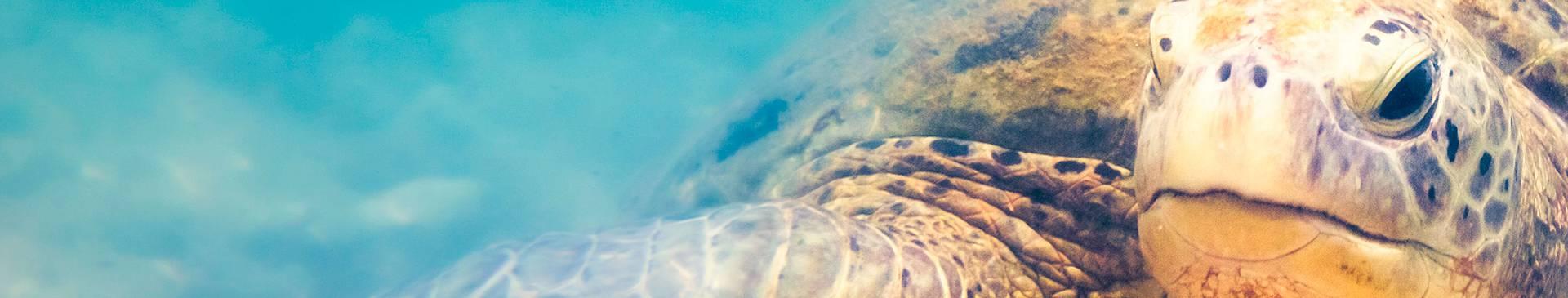 Plongée & Snorkeling au Sri Lanka