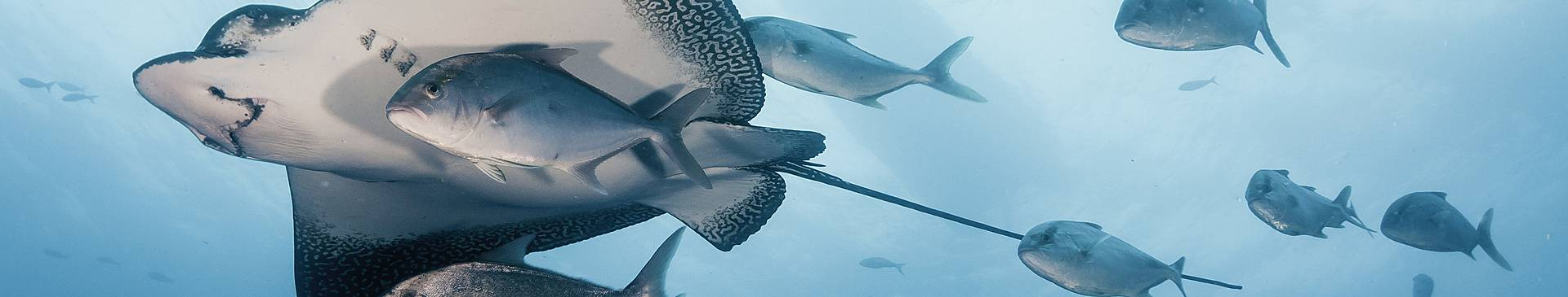 Plongée & Snorkeling en Equateur