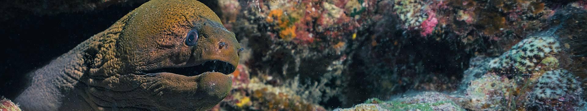 Plongée & Snorkeling en Polynésie française