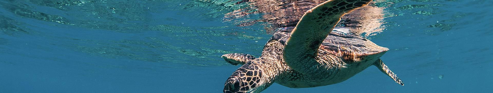 Plongée & Snorkeling à Hawaï
