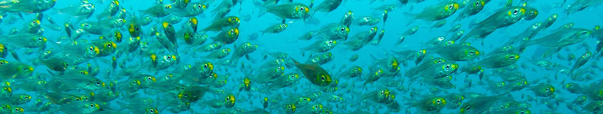 Plongée & Snorkeling à Oman