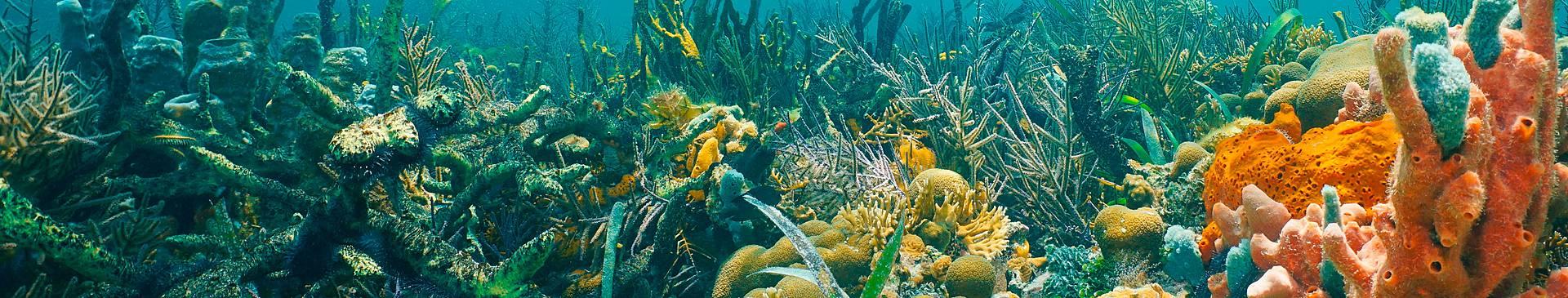 Plongée & Snorkeling au Panama