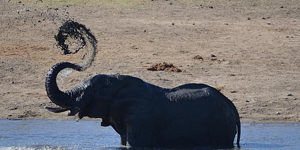 Elephant du parc Kruger