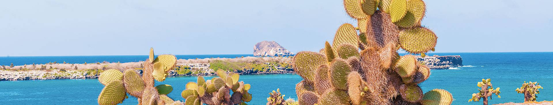 Summer in the Galapagos Islands