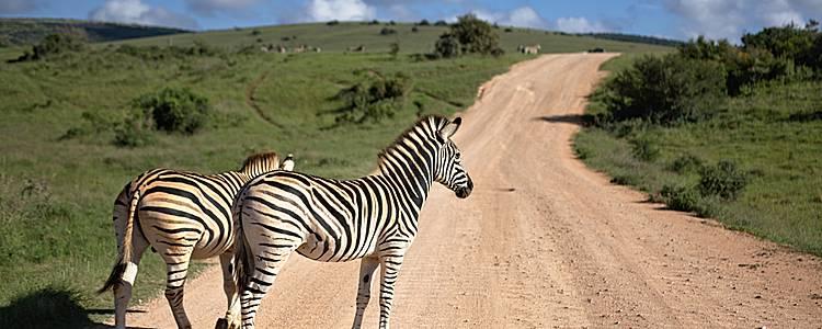 Desde Kruger hasta Garden Route en coche de alquiler