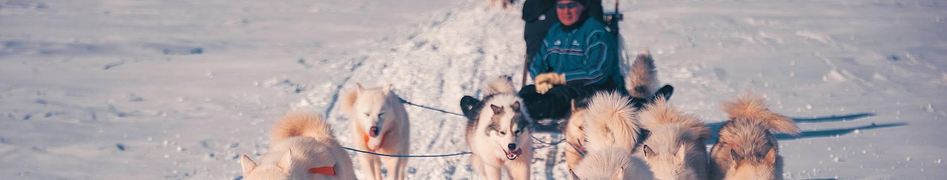 Greenland dog sledding tours
