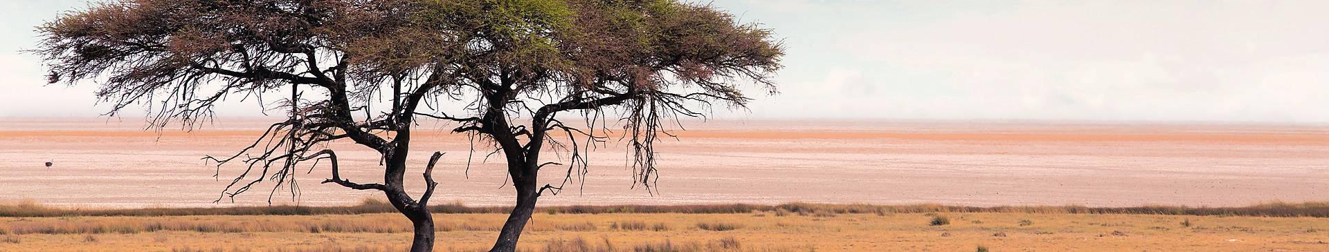 Wüstentour Botswana