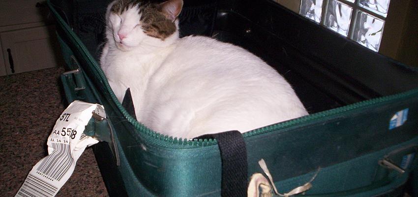 ¡No salgas de vacaciones con tu gato!