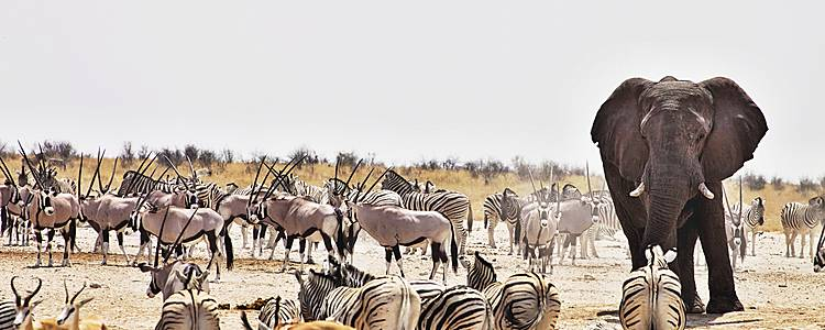 De Namibische droom met het gezin