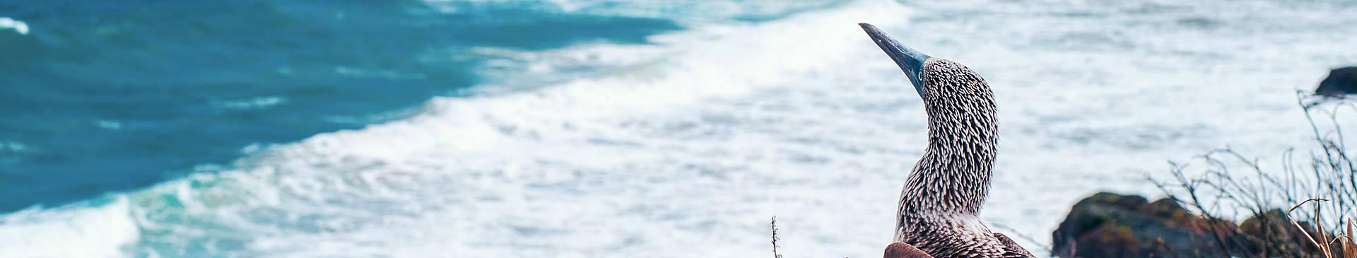 Découverte des îles d'Equateur
