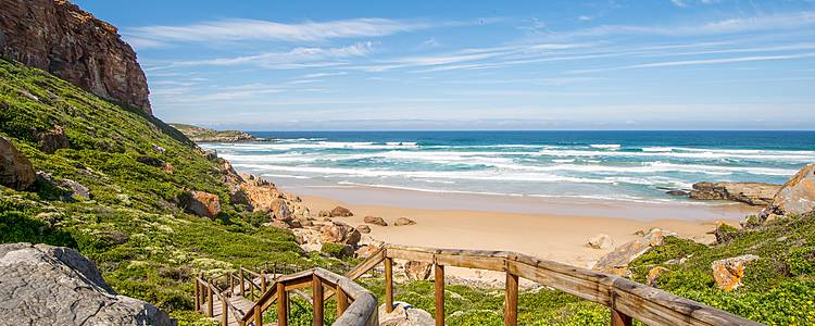 Cape Town, penguins and the Garden Route