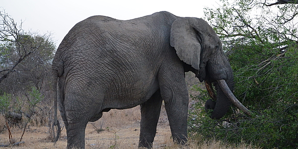 Safari dans le Zoulouland