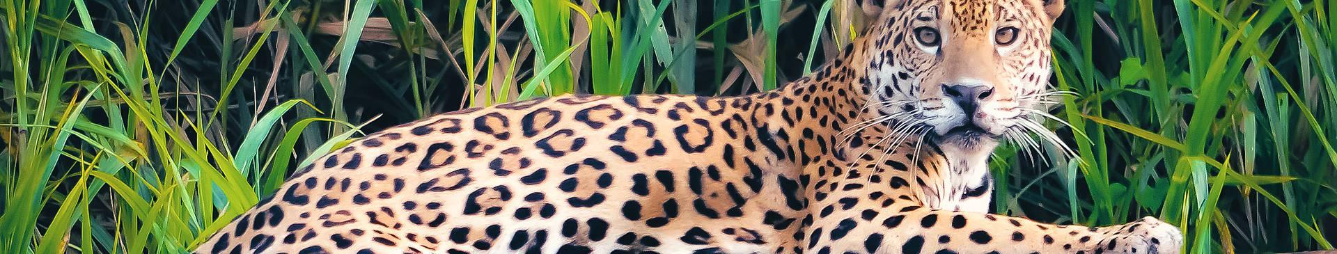Peru rainforest tours