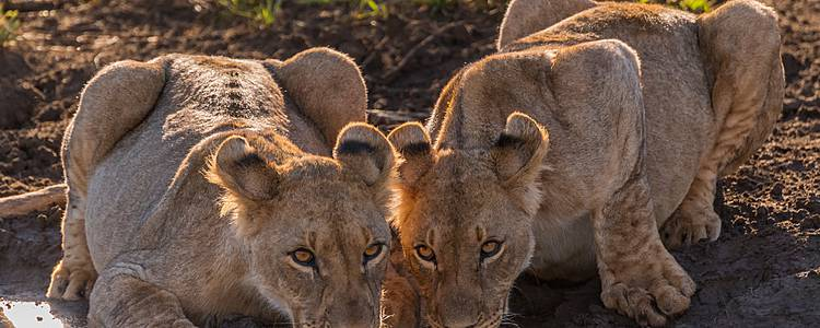 Esperienza di lusso tra Cape Town, Hermanus e la riserva Madikwe