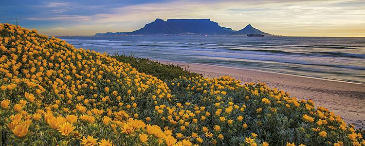 Viaggio di lusso tra Cape Town, vigneti spettacolari e Sabi Sand Game Reserve