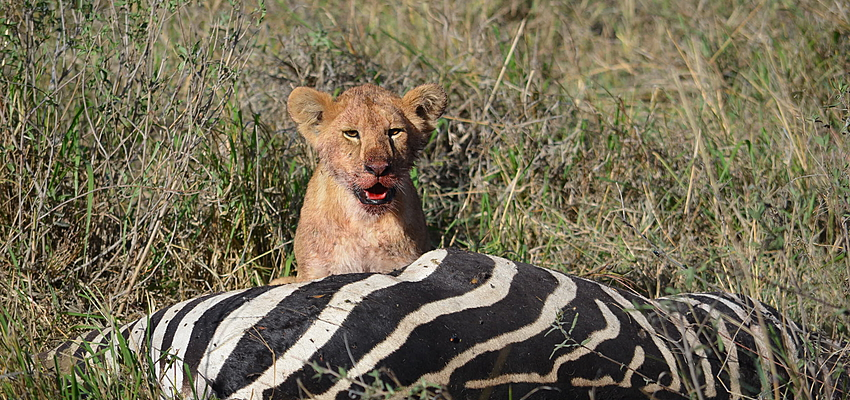 Kenya rencontres chasseurs