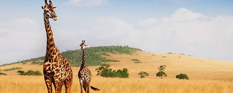 Huellas de Tanzania, descubre las maravillas de los Parques Nacionales