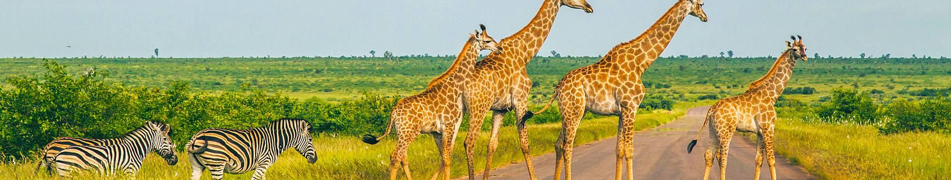 Circuits Safari au Mozambique