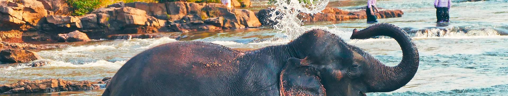 Safari au Laos