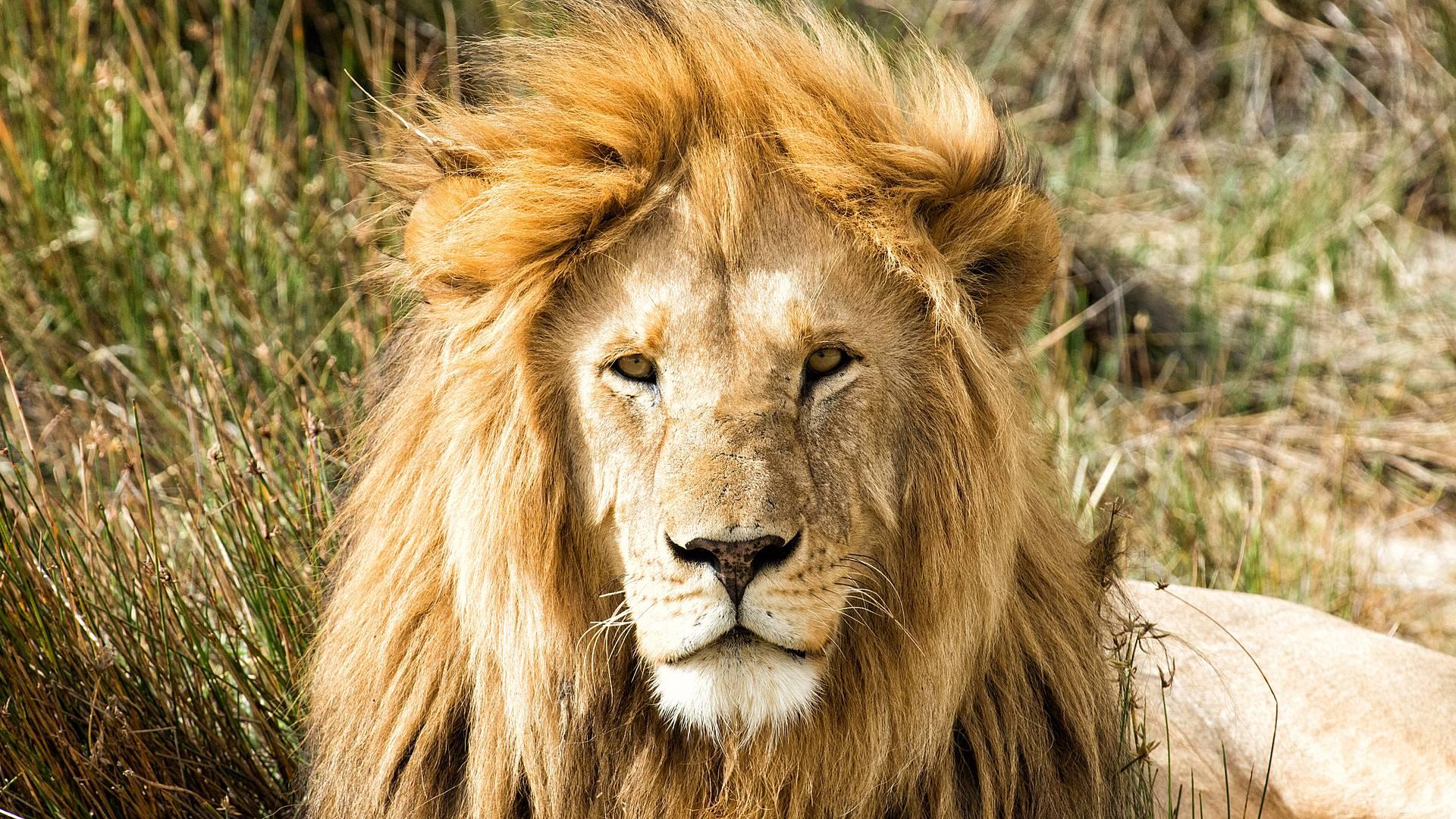 Safari Highlights Ostafrikas