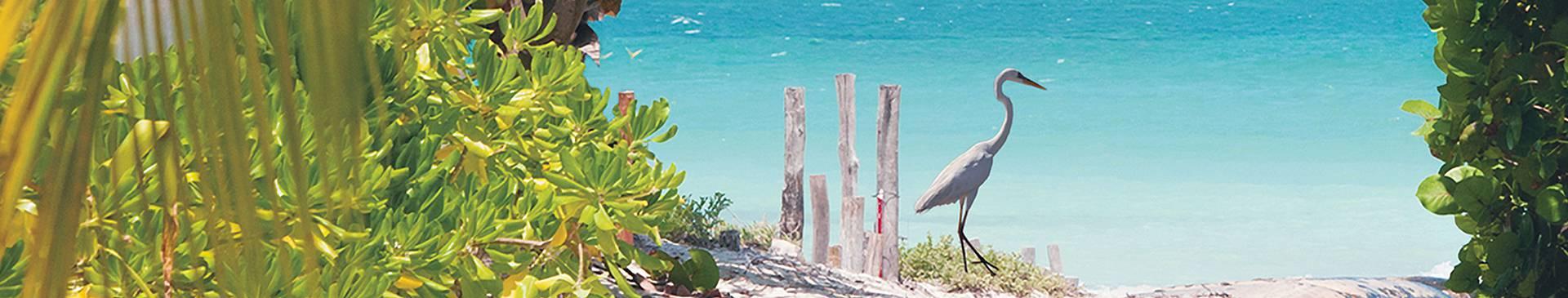 Découverte des îles du Mexique