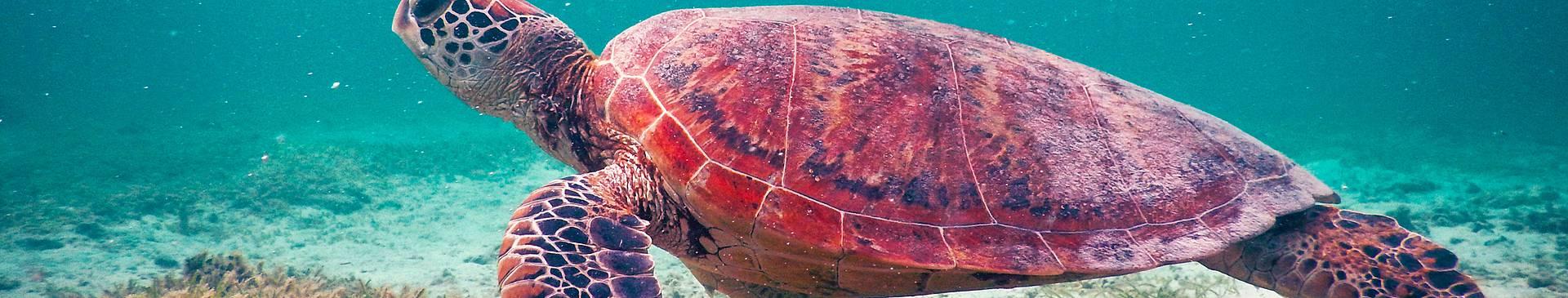 Plongée & Snorkeling en Nouvelle Calédonie