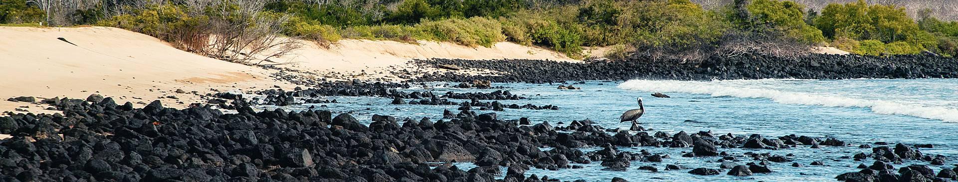 Eine Woche auf die Galapagos Inseln