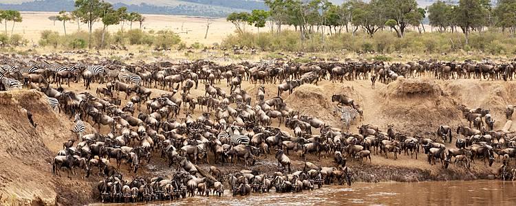 Fly-In Safari zur Gnuwanderung