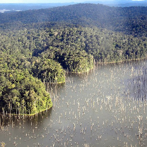 Sensation en forêt amazonienne - Cayenne -