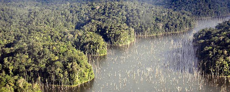 Sensation en forêt amazonienne