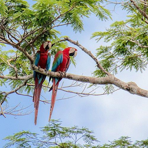 Entre jungle et communautés ethniques - Cayenne -