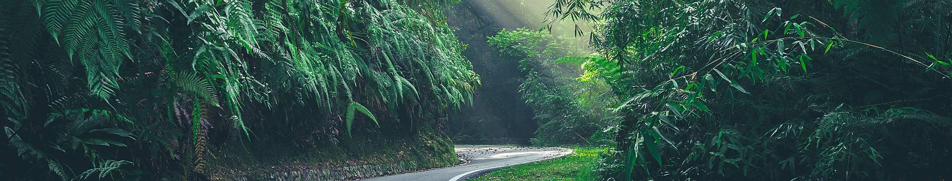 Road Trips in Peninsular Malaysia