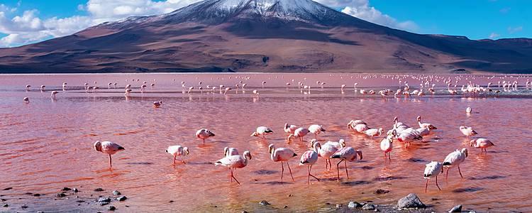 Salar di Uyuni dal Cile, andata e ritorno