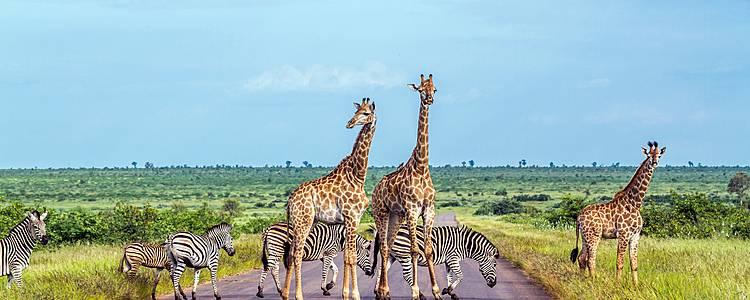Städte, Safaris und Strände