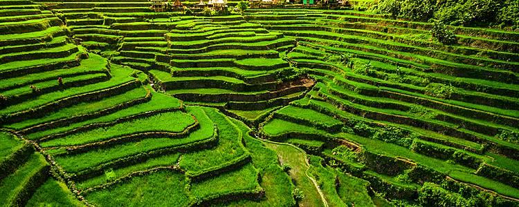 Terrazas de arroz del Norte de Filipinas y Palawan