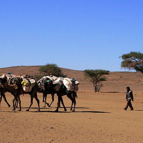 Caravane chamelière, de dunes en oasis - Ouarzazate -