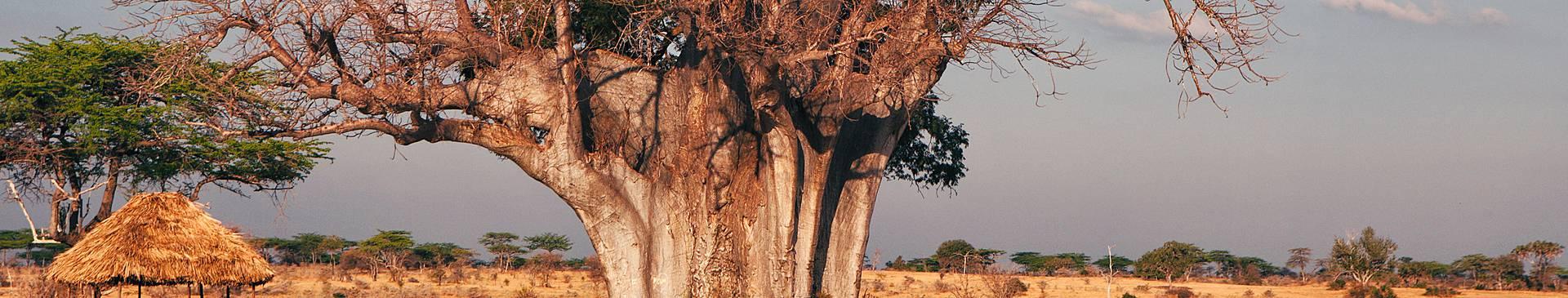 Eine Woche nach Tansania
