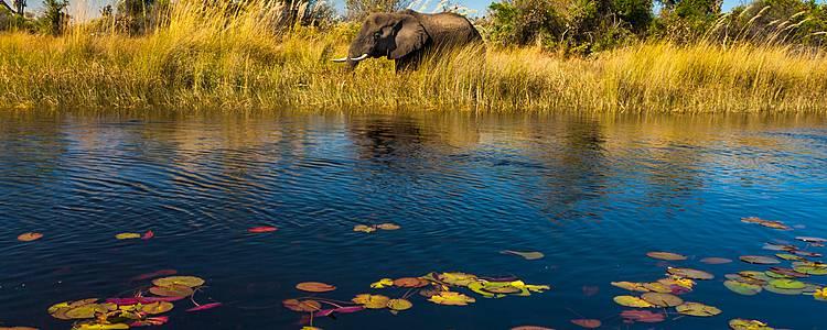 Chobe, Delta del Okavango y Moremi