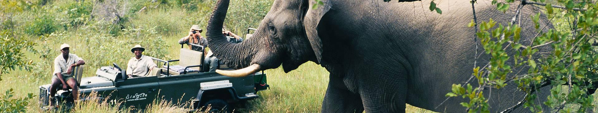Safari Reisen Südafrika