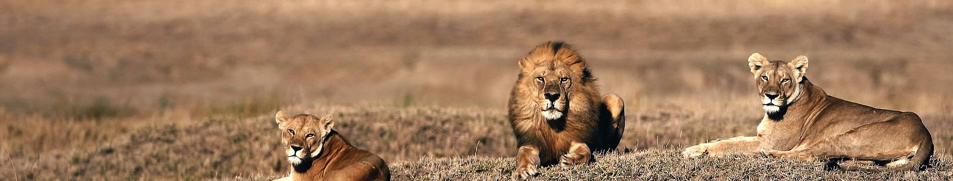 Safari Reisen Botswana