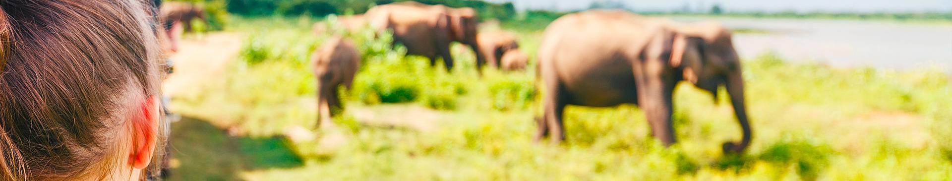 Safari Reisen Sri Lanka