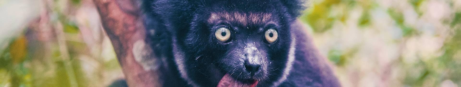 Safari Reisen Madagaskar