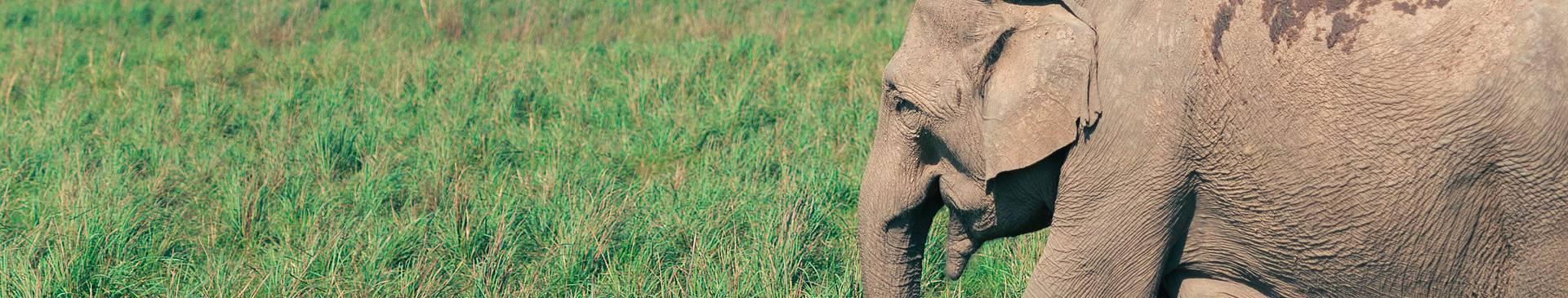 Safari Reisen Indien