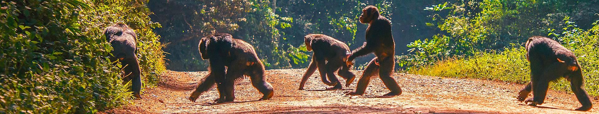 Safari Reisen Uganda