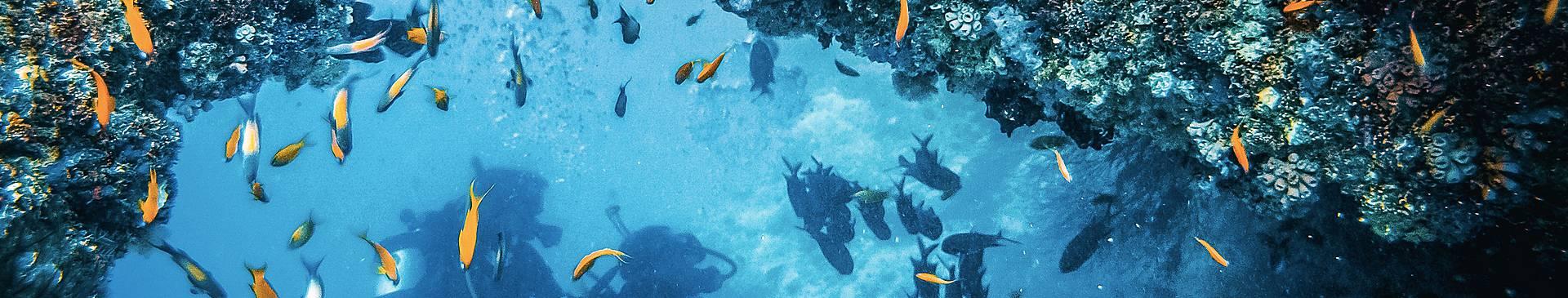 Schnorcheln und Tauchen Kapverden Reisen