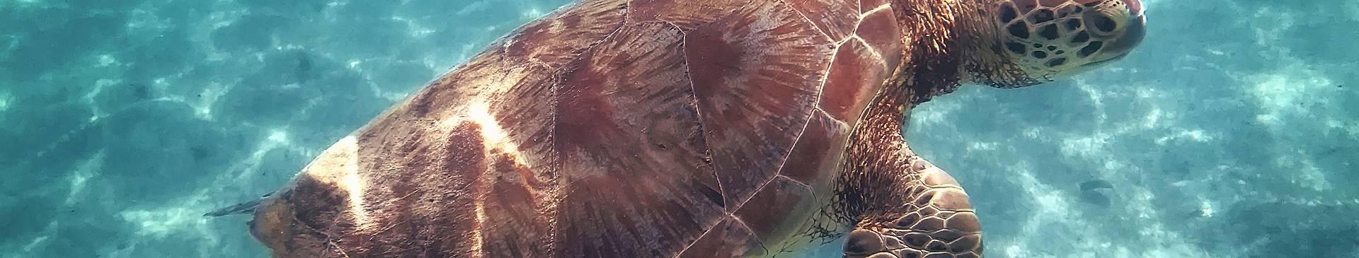 Schnorcheln und Tauchen Guadeloupe Reisen