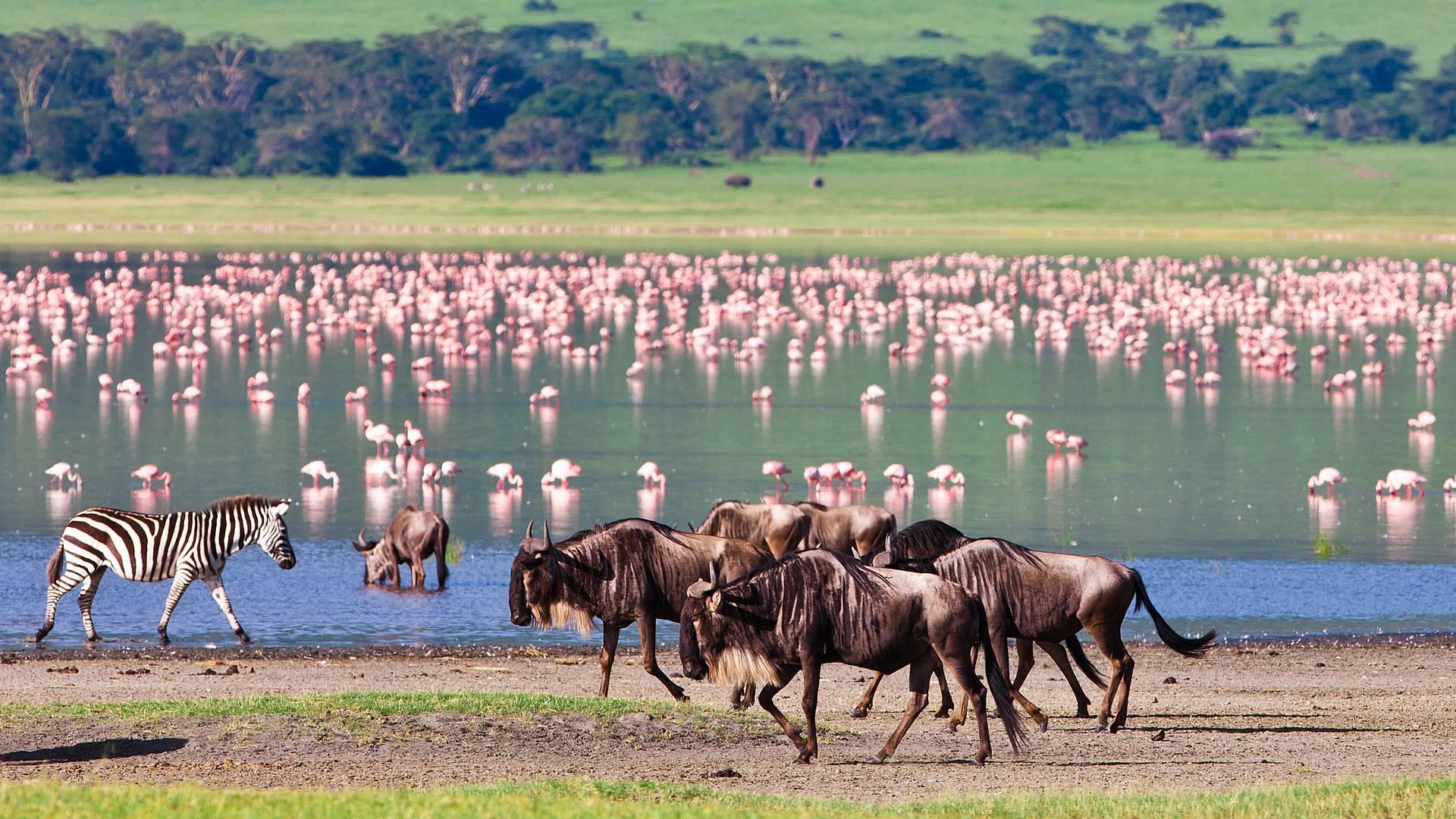 Safarireis Odyssee door Kenia en Tanzania