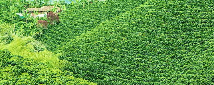 De la sabana al amazonas y del café al caribe